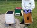 2013-beekeeping