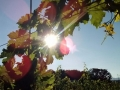2013-late-summer-cab